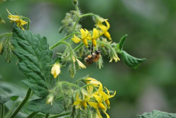 le service environnement de la ville de Guebwiller oeuvre à différent niveau en faveur de la biodiversité