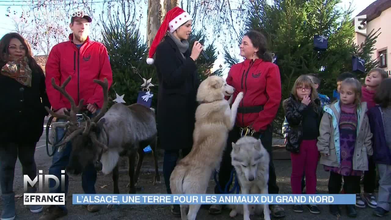 Les animaux venus du froid ont aussi eu leur moment de gloire dans l'émission Midi en France, à Guebwiller